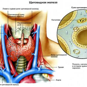СЕНСАЦИЯ! Благодаря этому соку можно восстановить функции щитовидной железы и нормализировать обмен веществ в организме.