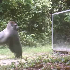 Звери в шоке: ученые поставили зеркало посреди джунглей