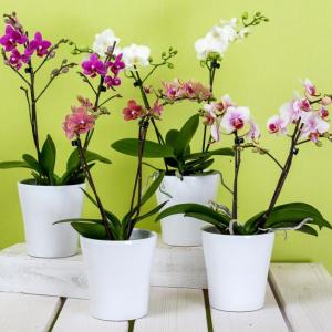 У вас есть одна орхидея. А хотите, чтобы их было 100?