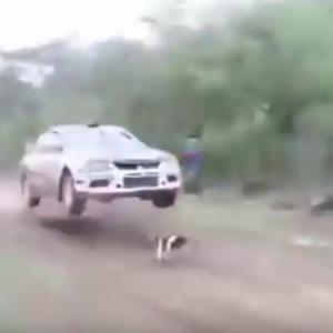 «Самая везучая в мире собака» стала интернет-звездой