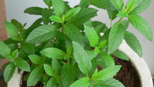 Если у тебя в доме есть это растение, ты больше не увидишь пауков, жуков и плодовых мушек!
