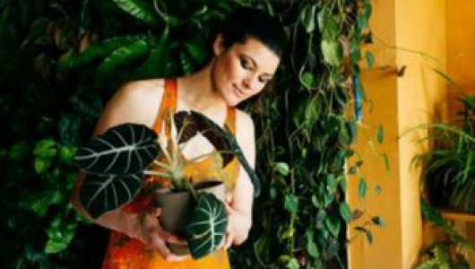 Бурное цветение и пышная листва обеспечены, если полить растения этой простой подкормкой!